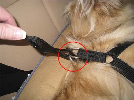 Clip tether to harness